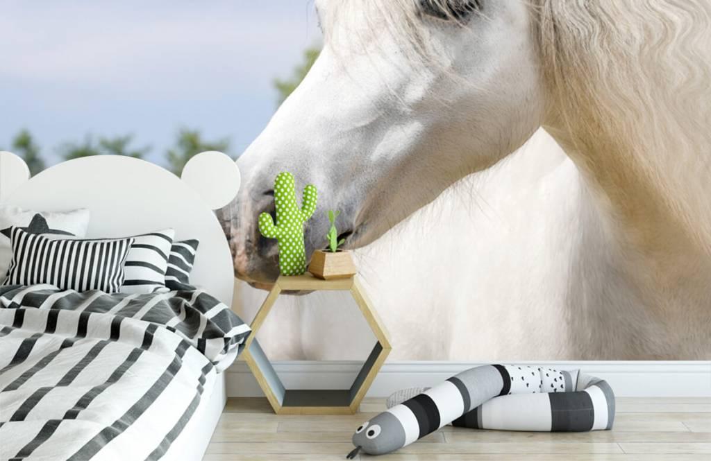 Paarden - Witte eenhoorn - Kinderkamer 3