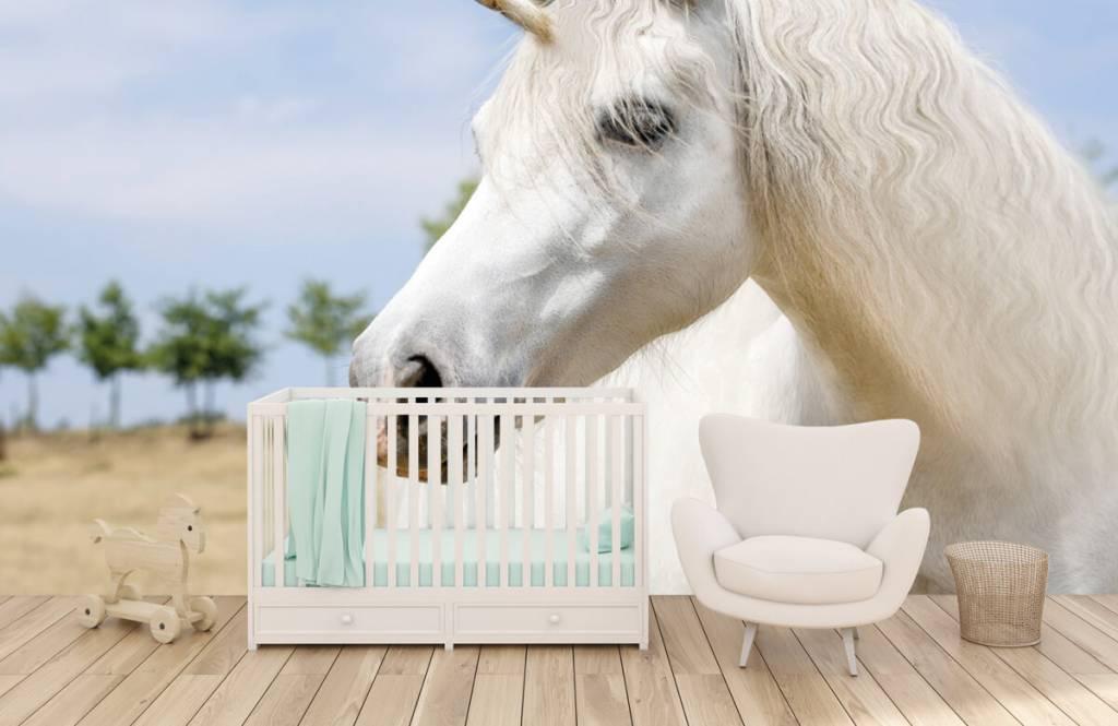 Paarden - Witte eenhoorn - Kinderkamer 5