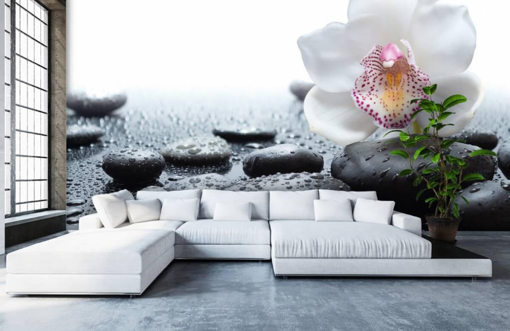 Overige - Witte orchidee - Ontvangstruimte 1