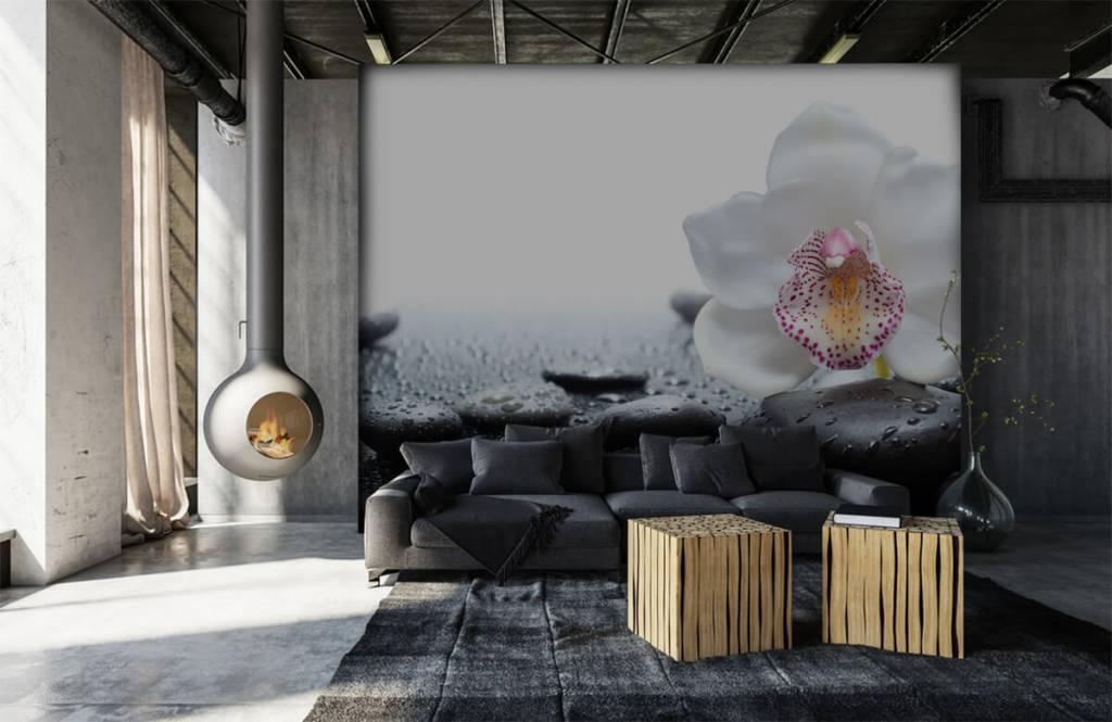 Overige - Witte orchidee - Ontvangstruimte 6