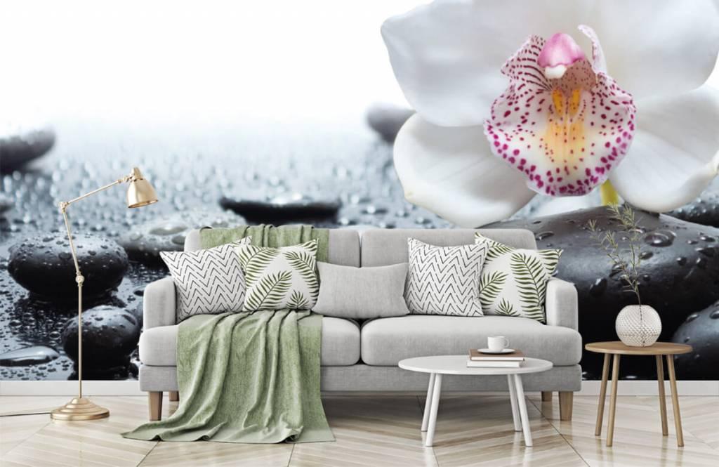 Overige - Witte orchidee - Ontvangstruimte 7