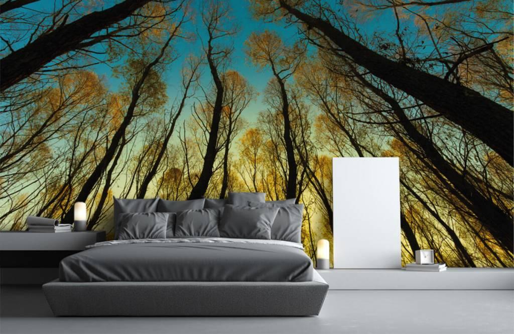 Bos behang - Zonsopkomst tussen hoge bomen - Slaapkamer 1