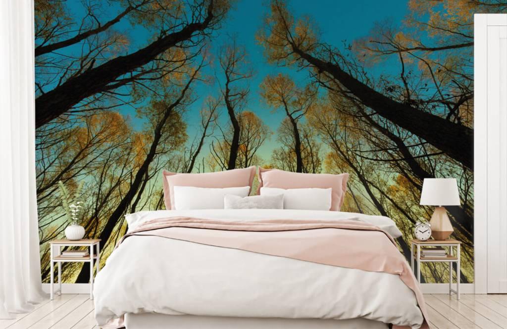 Bos behang - Zonsopkomst tussen hoge bomen - Slaapkamer 2