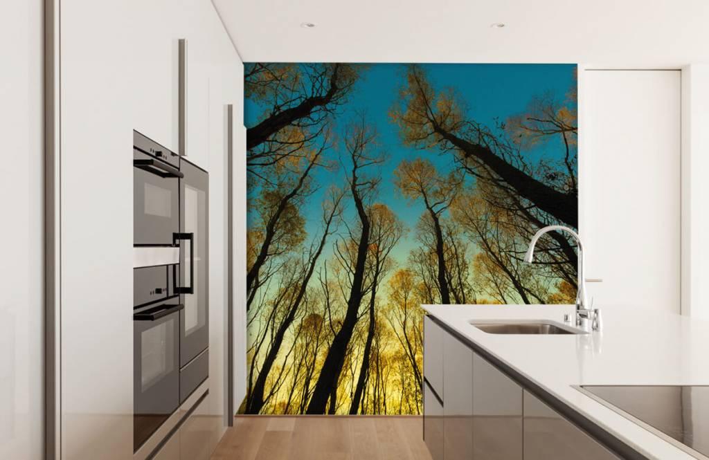 Bos behang - Zonsopkomst tussen hoge bomen - Slaapkamer 3