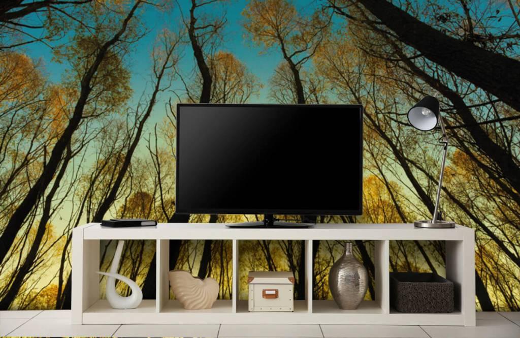 Bos behang - Zonsopkomst tussen hoge bomen - Slaapkamer 4