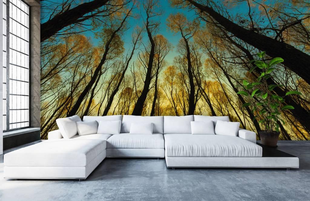 Bos behang - Zonsopkomst tussen hoge bomen - Slaapkamer 5