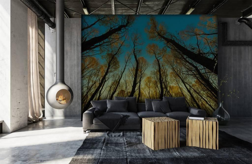 Bos behang - Zonsopkomst tussen hoge bomen - Slaapkamer 6