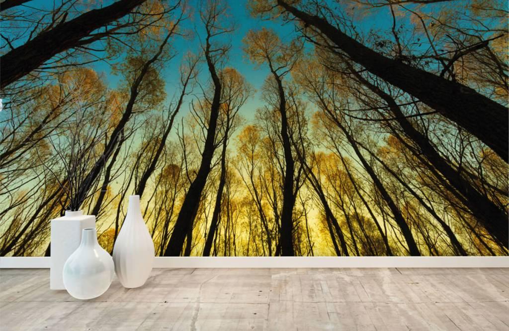 Bos behang - Zonsopkomst tussen hoge bomen - Slaapkamer 8