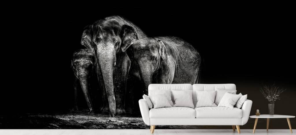 Olifanten - Zwart wit foto van olifanten - Woonkamer 1