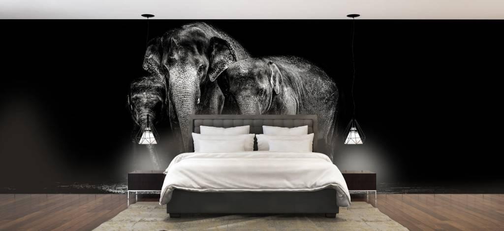 Olifanten - Zwart wit foto van olifanten - Woonkamer 2