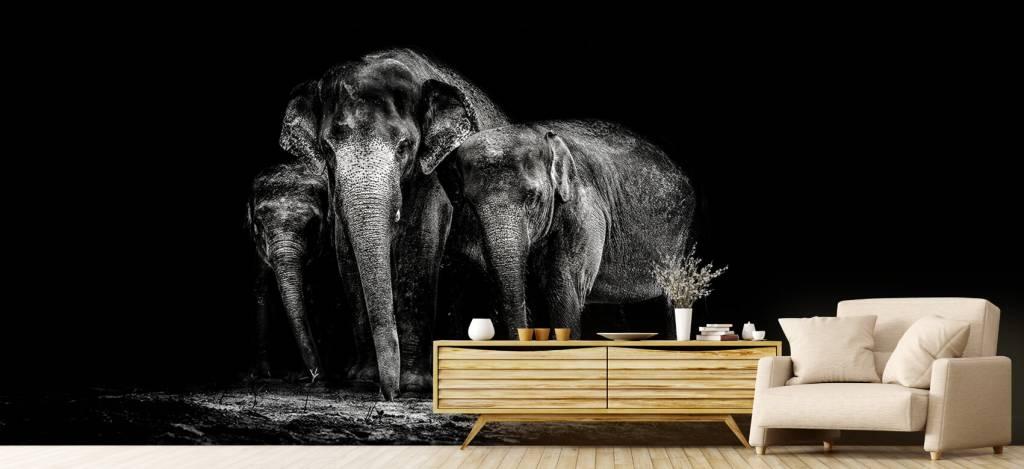 Olifanten - Zwart wit foto van olifanten - Woonkamer 4