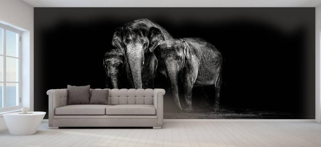 Olifanten - Zwart wit foto van olifanten - Woonkamer 5