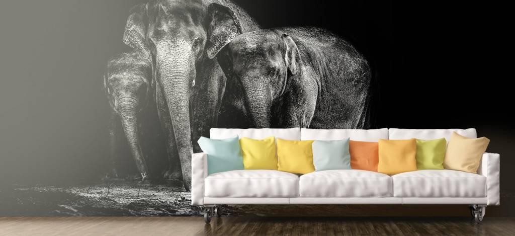Olifanten - Zwart wit foto van olifanten - Woonkamer 6