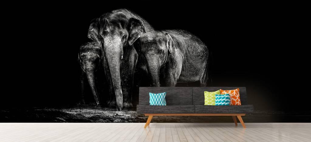 Olifanten - Zwart wit foto van olifanten - Woonkamer 7