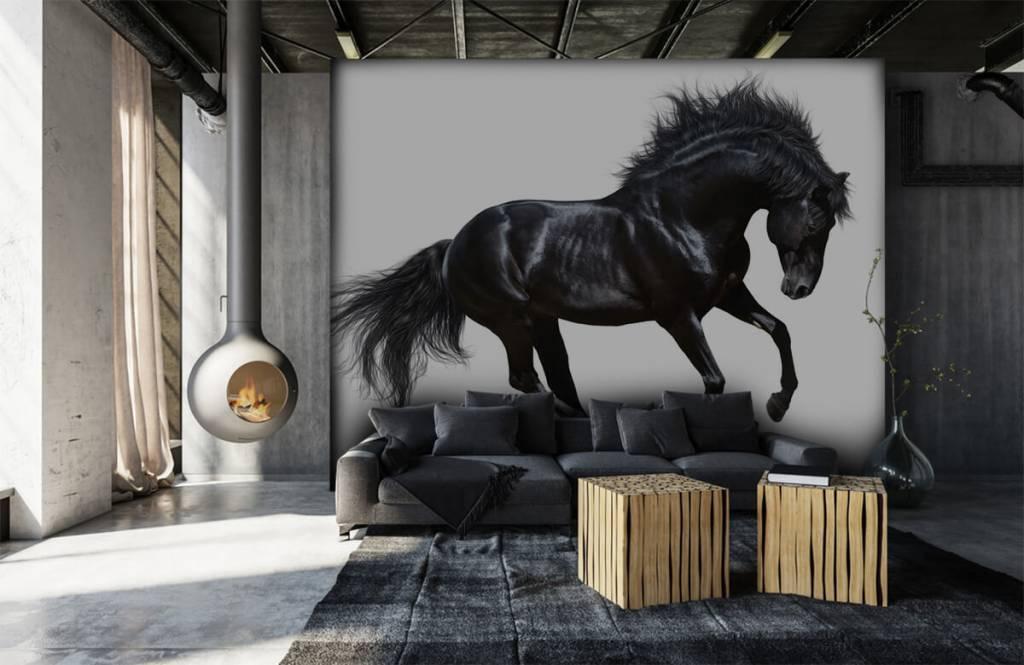 Paarden - Zwarte hengst - Kinderkamer 1