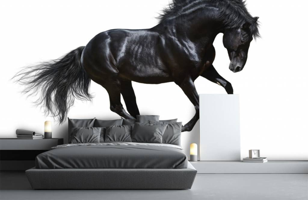 Paarden - Zwarte hengst - Kinderkamer 3