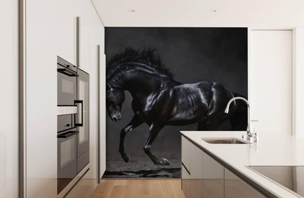 Paarden - Zwarte hengst - Kinderkamer 4