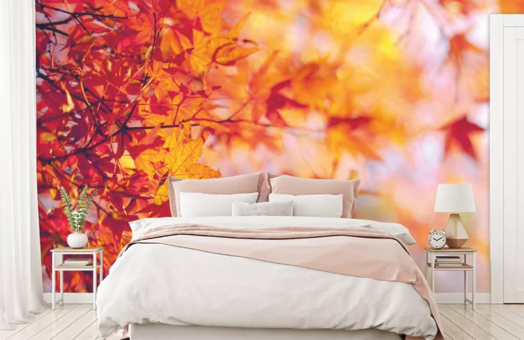 Bladeren - Herfstbladeren - Slaapkamer 1