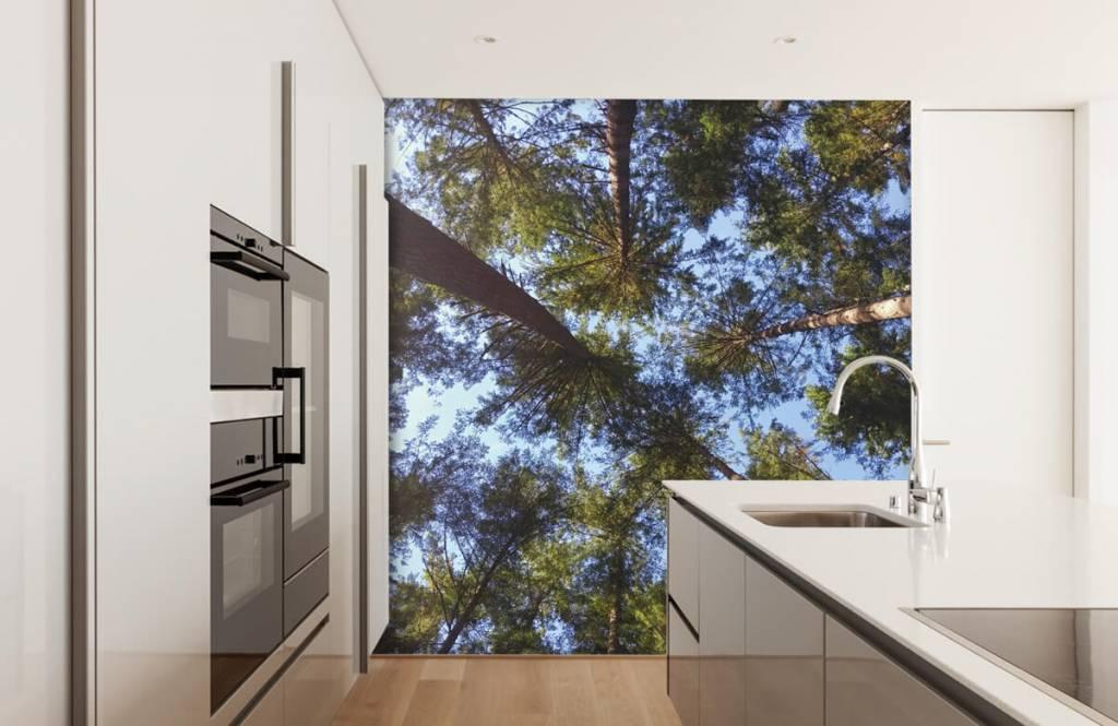 Bos behang - Hoge naaldbomen - Slaapkamer 1