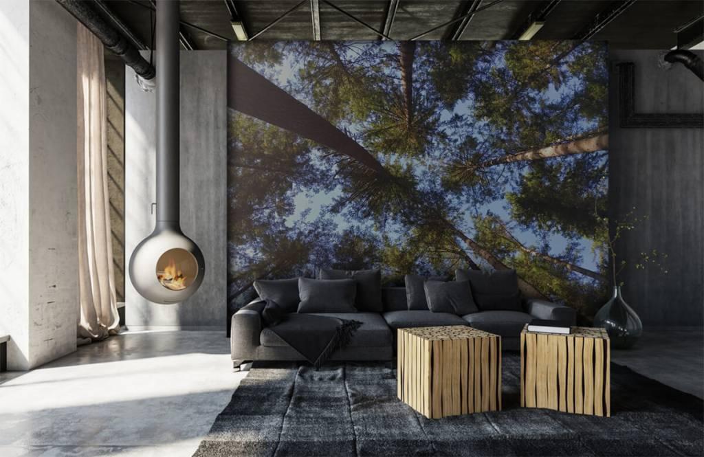 Bos behang - Hoge naaldbomen - Slaapkamer 6