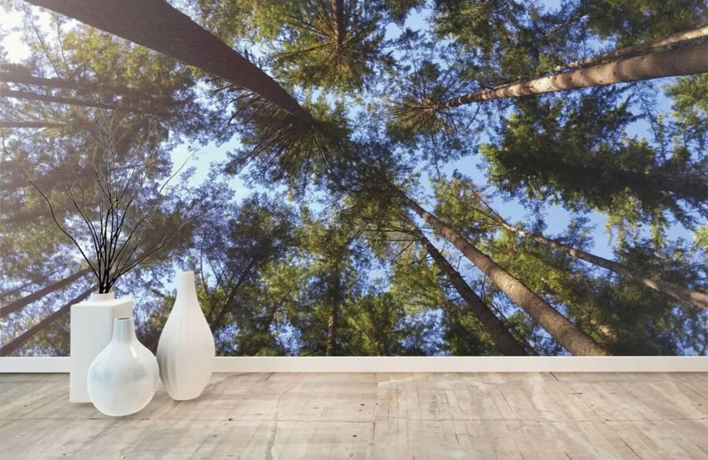 Bos behang - Hoge naaldbomen - Slaapkamer 8