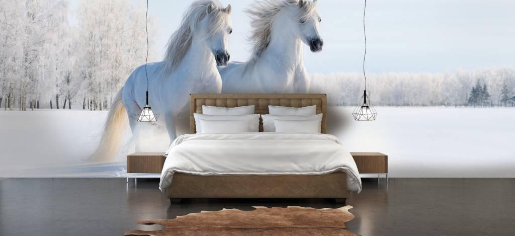 Paarden - Paarden in de sneeuw - Tienerkamer 2