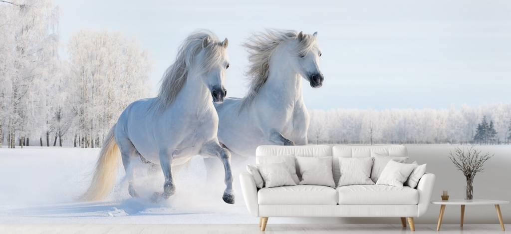 Paarden - Paarden in de sneeuw - Tienerkamer 3