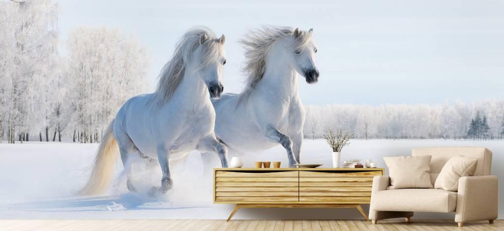 Paarden - Paarden in de sneeuw - Tienerkamer 4