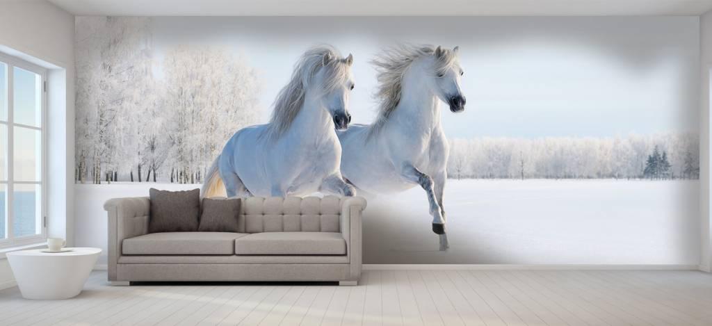 Paarden - Paarden in de sneeuw - Tienerkamer 5