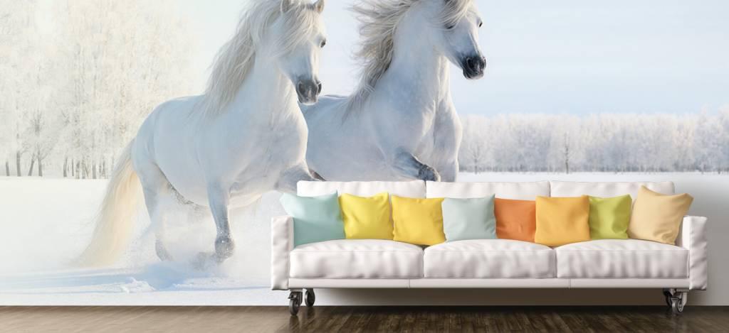 Paarden - Paarden in de sneeuw - Tienerkamer 6
