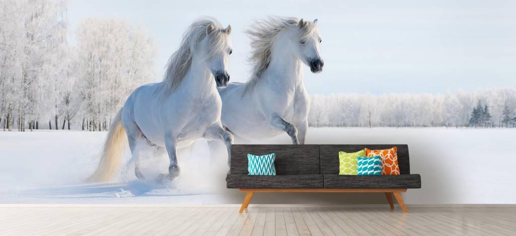 Paarden - Paarden in de sneeuw - Tienerkamer 7