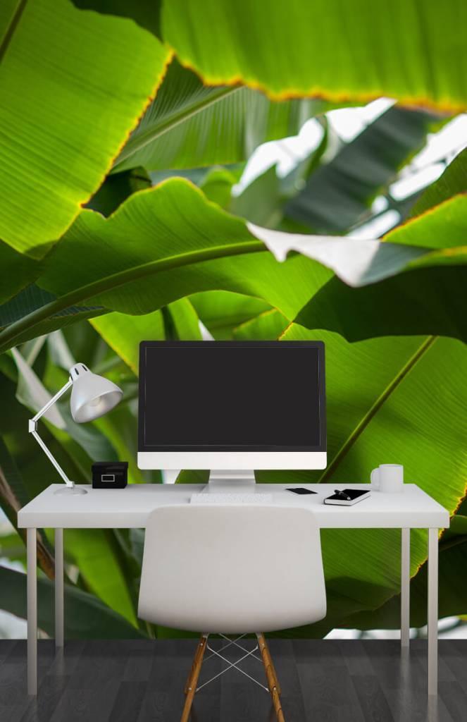 Bladeren - Palmbladeren - Computerruimte 6