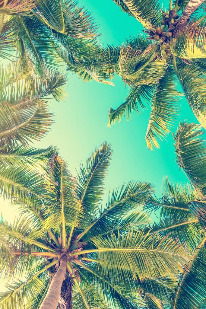 Palmbomen - Behang met palmbomen - Slaapkamer 9