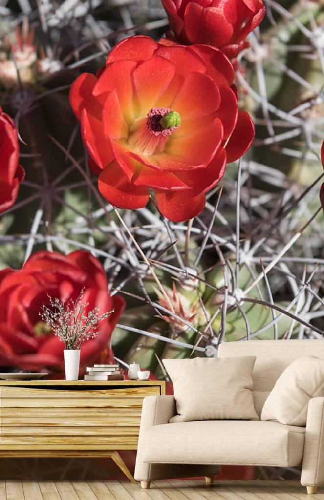 Overige - Rode cactus bloemen - Slaapkamer 1