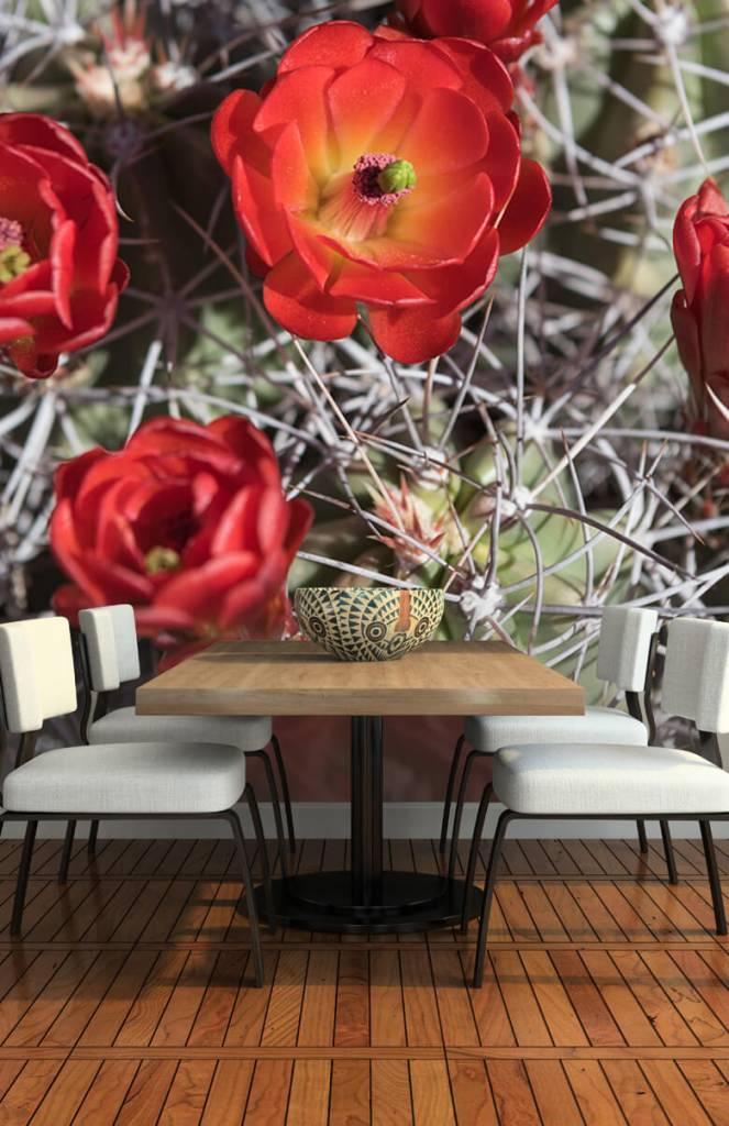 Overige - Rode cactus bloemen - Slaapkamer 3