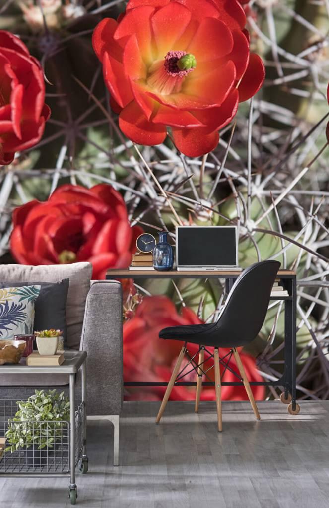 Overige - Rode cactus bloemen - Slaapkamer 4