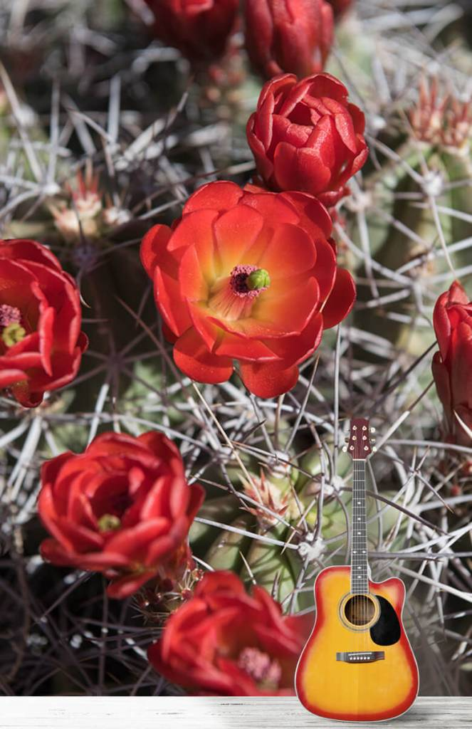 Overige - Rode cactus bloemen - Slaapkamer 5