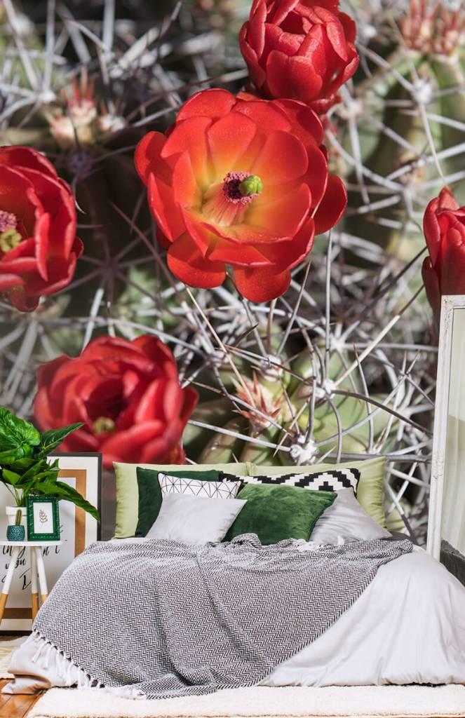 Overige - Rode cactus bloemen - Slaapkamer 6