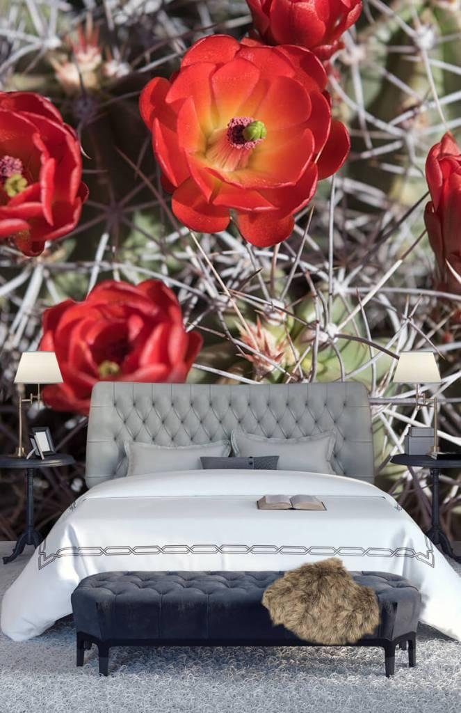 Overige - Rode cactus bloemen - Slaapkamer 7