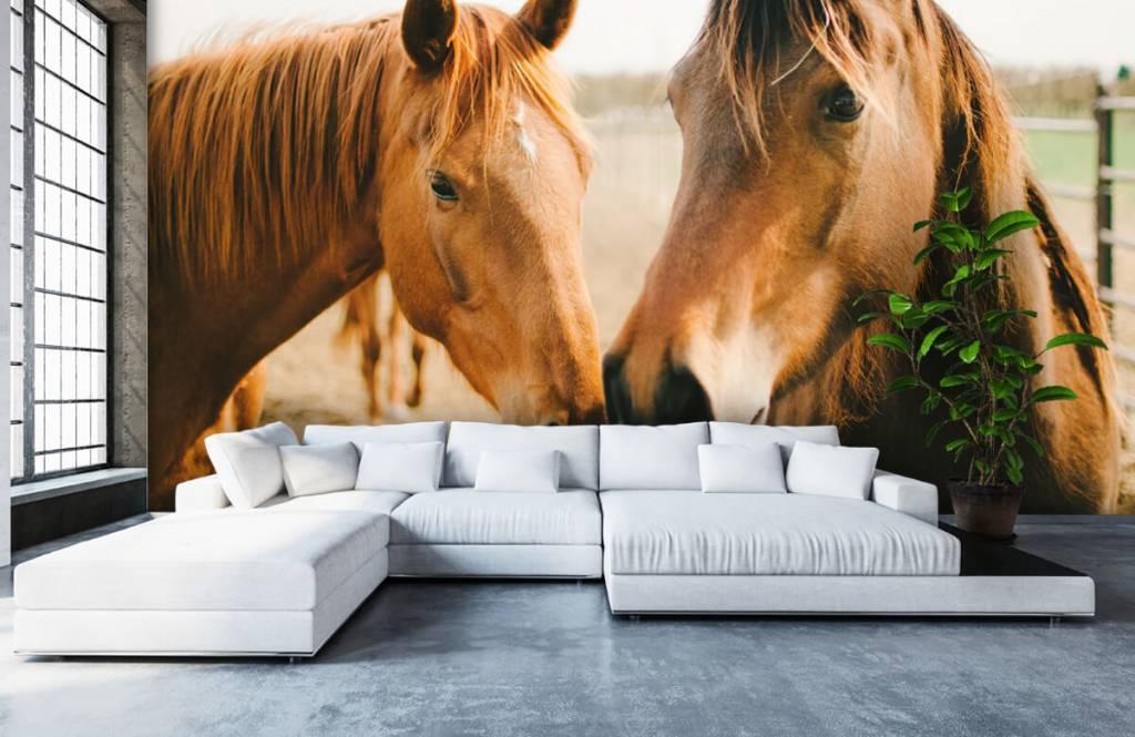 Paarden - Twee paarden - Kinderkamer 4