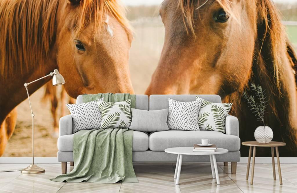 Paarden - Twee paarden - Kinderkamer 5