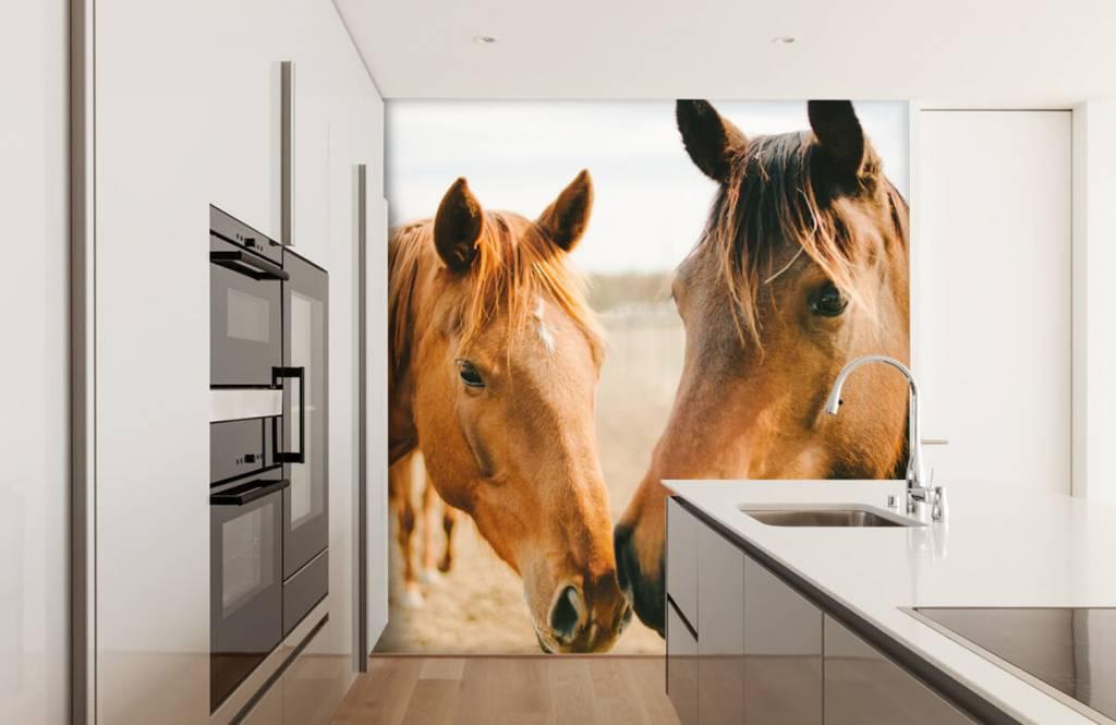 Paarden - Twee paarden - Kinderkamer 7