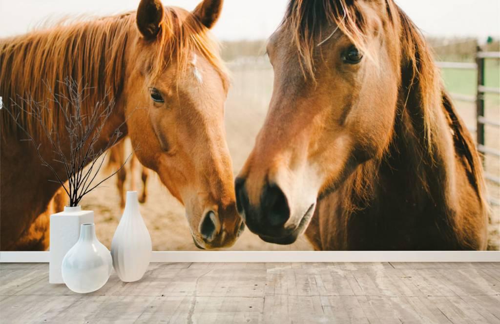 Paarden - Twee paarden - Kinderkamer 8