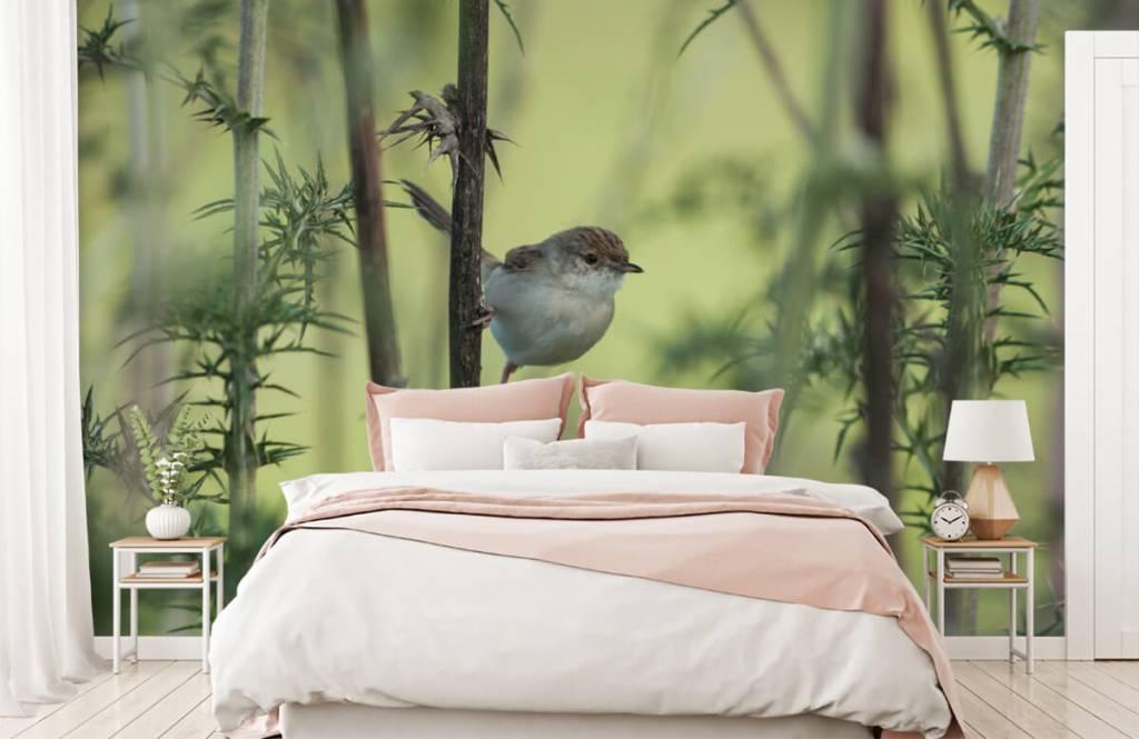 Vogel behang - Vogel op een tak - Hobbykamer 1