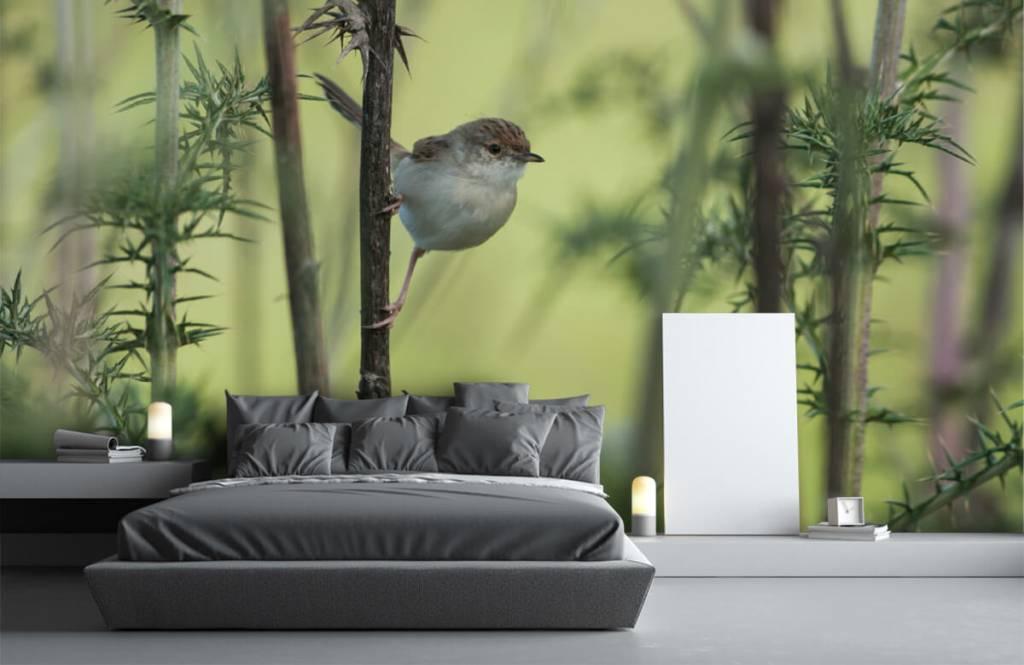 Vogel behang - Vogel op een tak - Hobbykamer 2