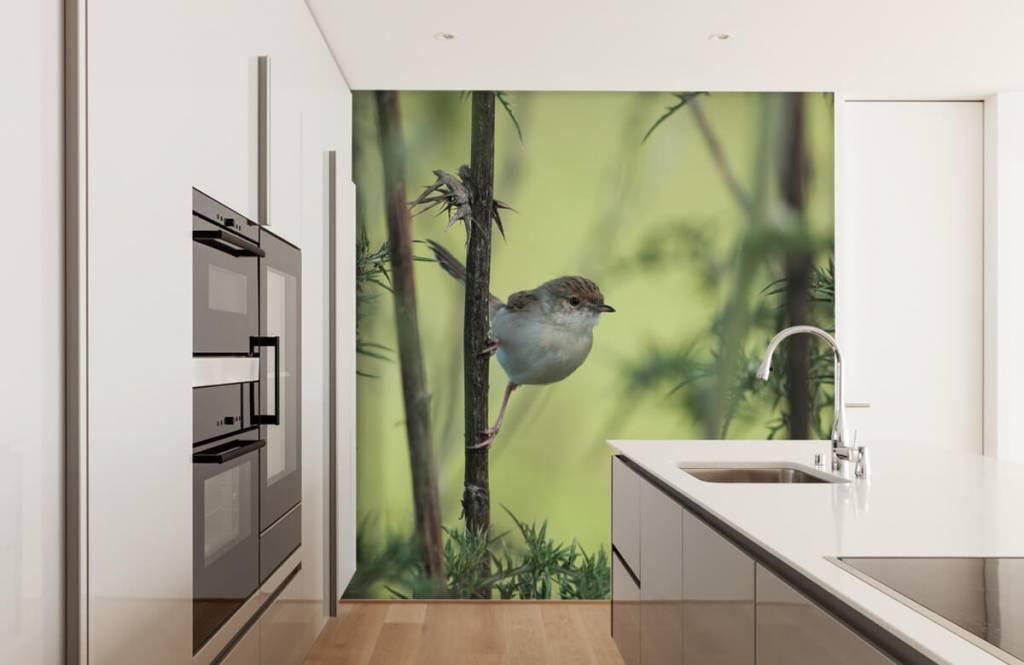 Vogel behang - Vogel op een tak - Hobbykamer 3