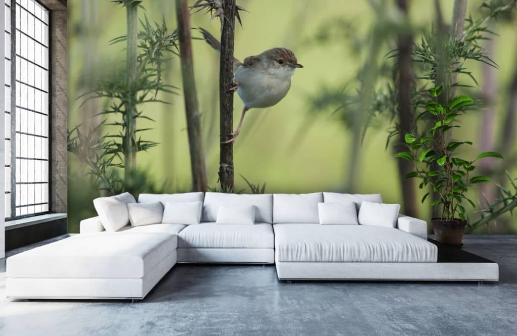 Vogel behang - Vogel op een tak - Hobbykamer 5