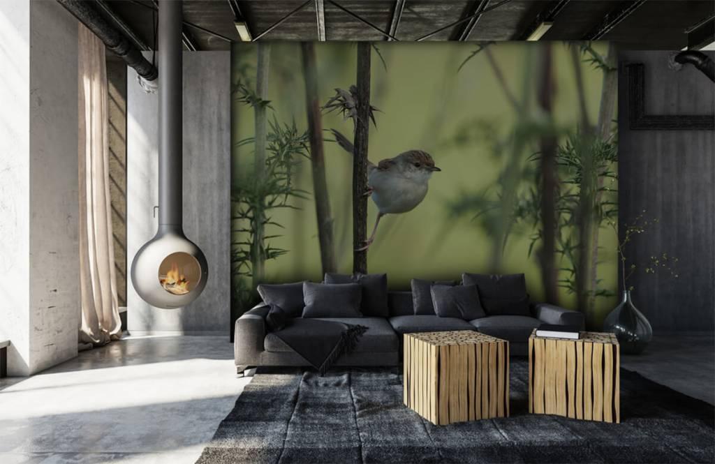 Vogel behang - Vogel op een tak - Hobbykamer 6