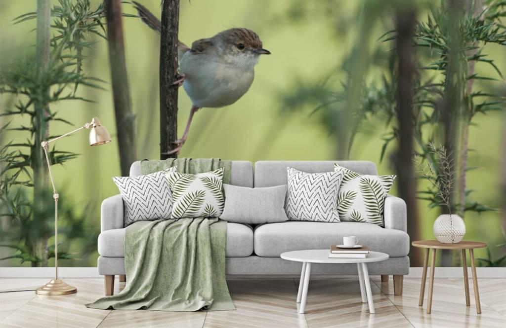 Vogel behang - Vogel op een tak - Hobbykamer 7