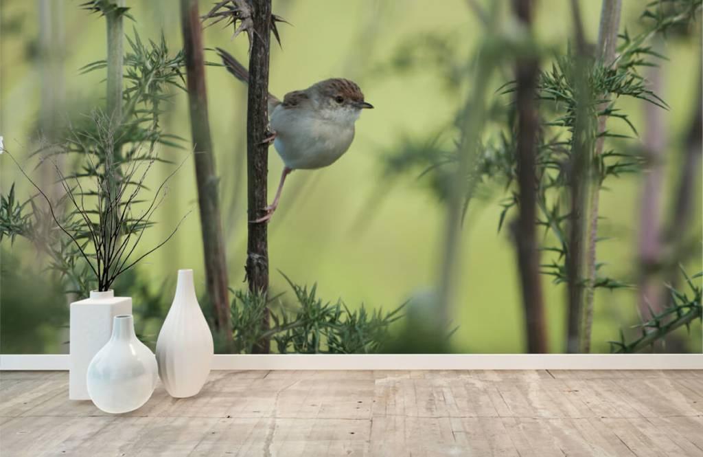 Vogel behang - Vogel op een tak - Hobbykamer 8